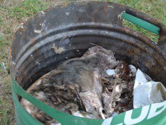 Animal muerto (1)
